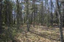 1591999 - Fully Wooded 11 Acres With Variety of Trees, WI!